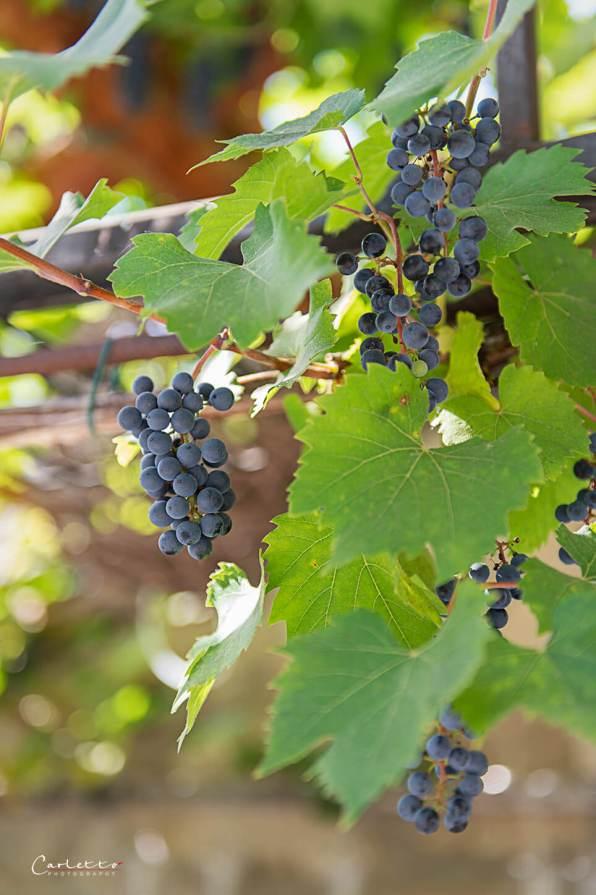 Burgenland Wein Kellergasse_1395