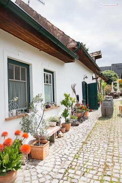 Burgenland Wein Weingut Baur_0837