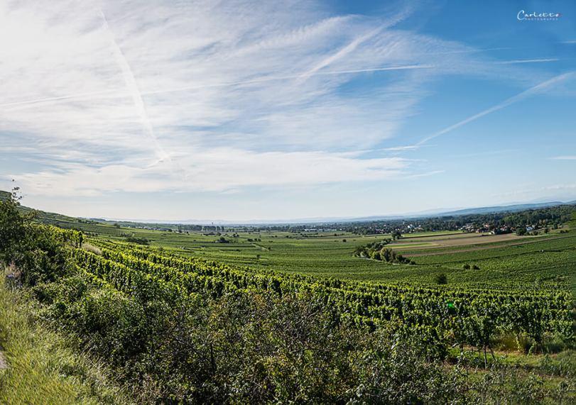 Niederösterreich Weingarten Tour_2431-Panorama