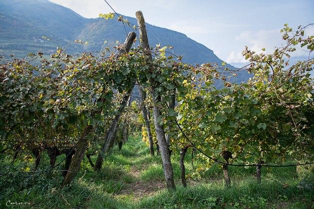 Südtirol Loaker_1478