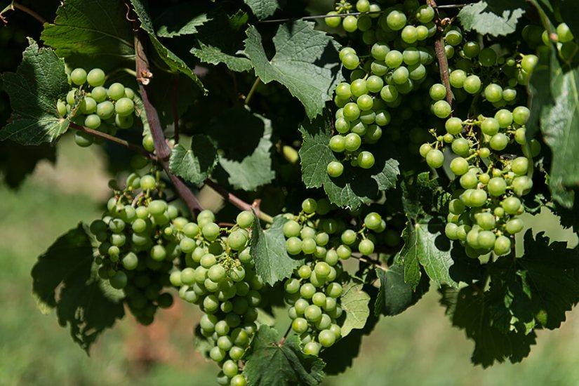 Österreich Wein Kerbl_1648