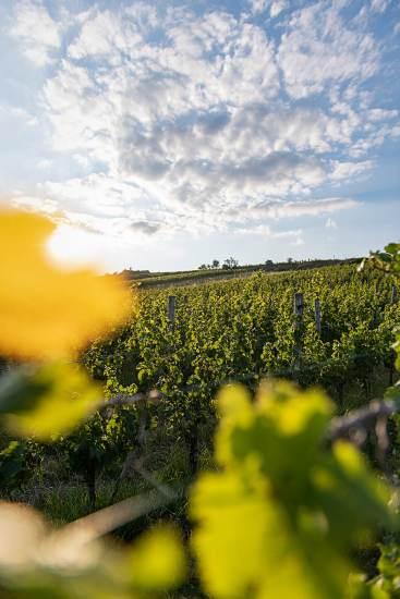 Österreich Wein Wieninger_2196