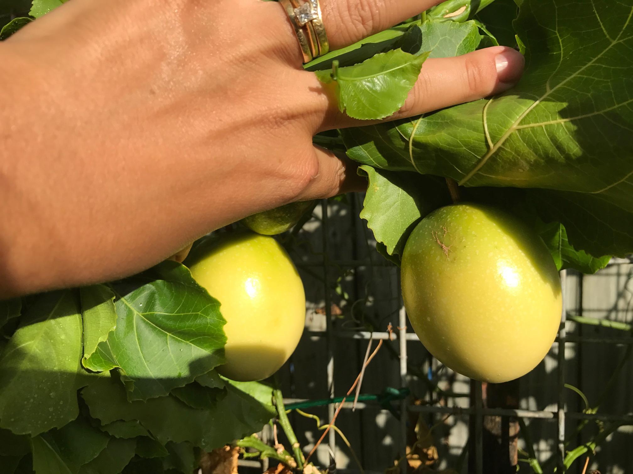Passionfruit and Lemon Cake