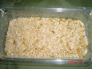 Mealworms in Grain