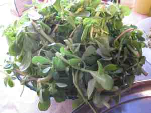 purslane in bowl