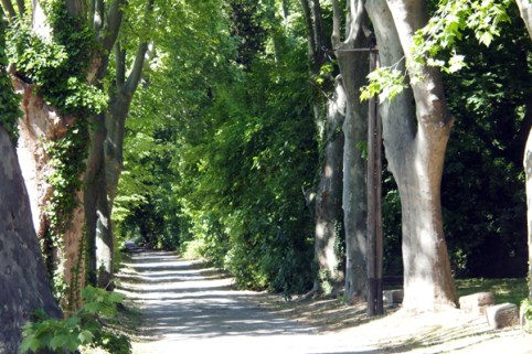 Plane tree lined roads lead into Saint-Rémy