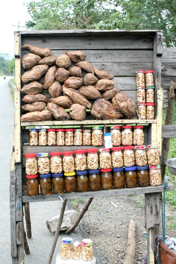 Cashews in the Dominican Republic 01