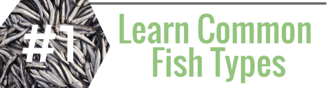 Learn Common Fish Types