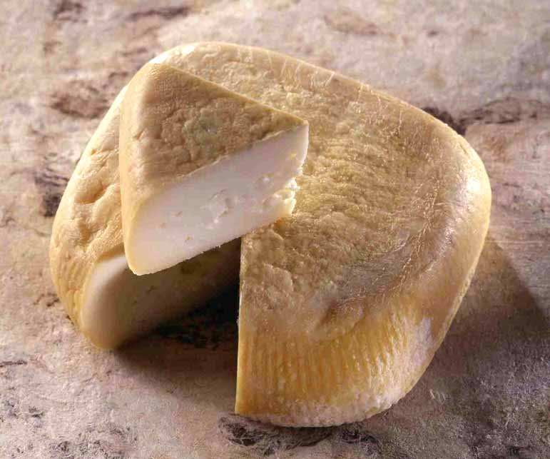 Wiki Information And Photos Of Niolo Cheese