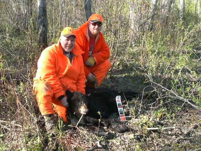 black bear hunt canada - image