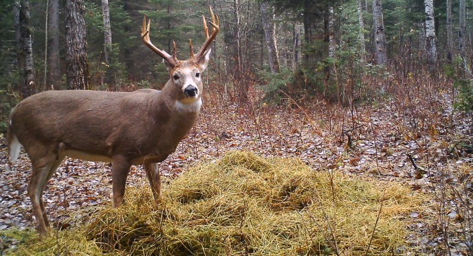 trial camera deer - image
