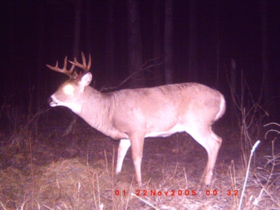 trail cam - image