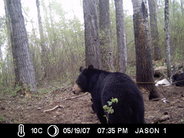 trail cam -images