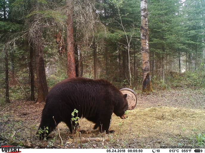 beat-hunts-canada-trail-cam (1)