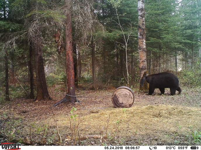 beat-hunts-canada-trail-cam (2)