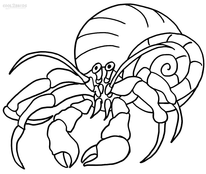crab shells coloring page printable hermit crab coloring pages