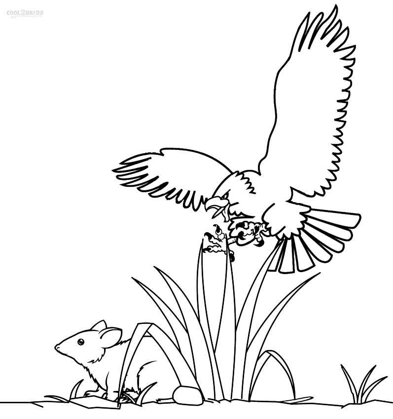 bald eagle coloring printable bald eagle coloring pages for kids