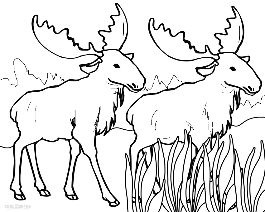 printable moose coloring pages for kids cool2bkids