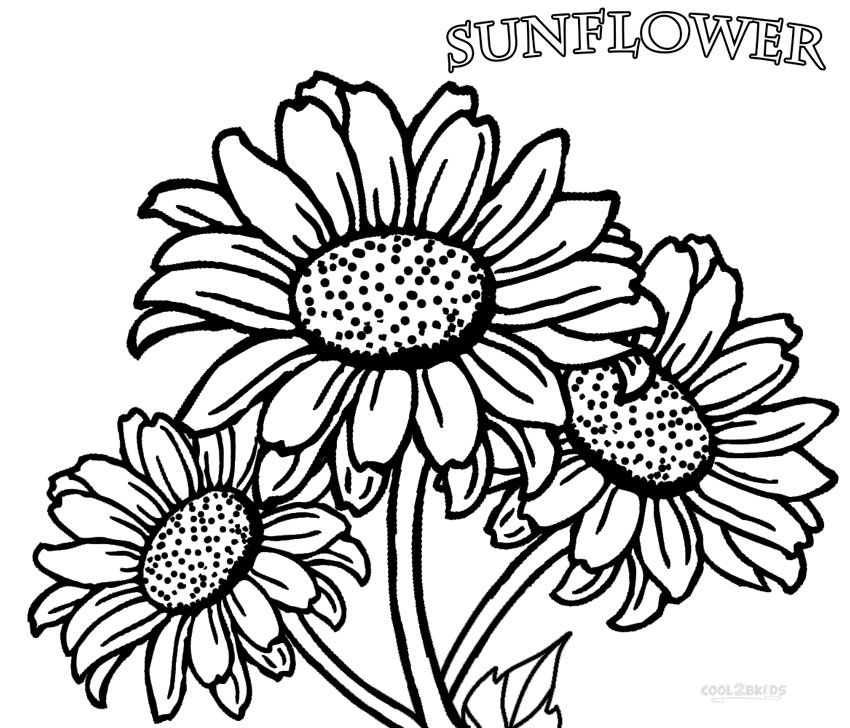 sunflower coloring pages free coloring pages printable sunflower