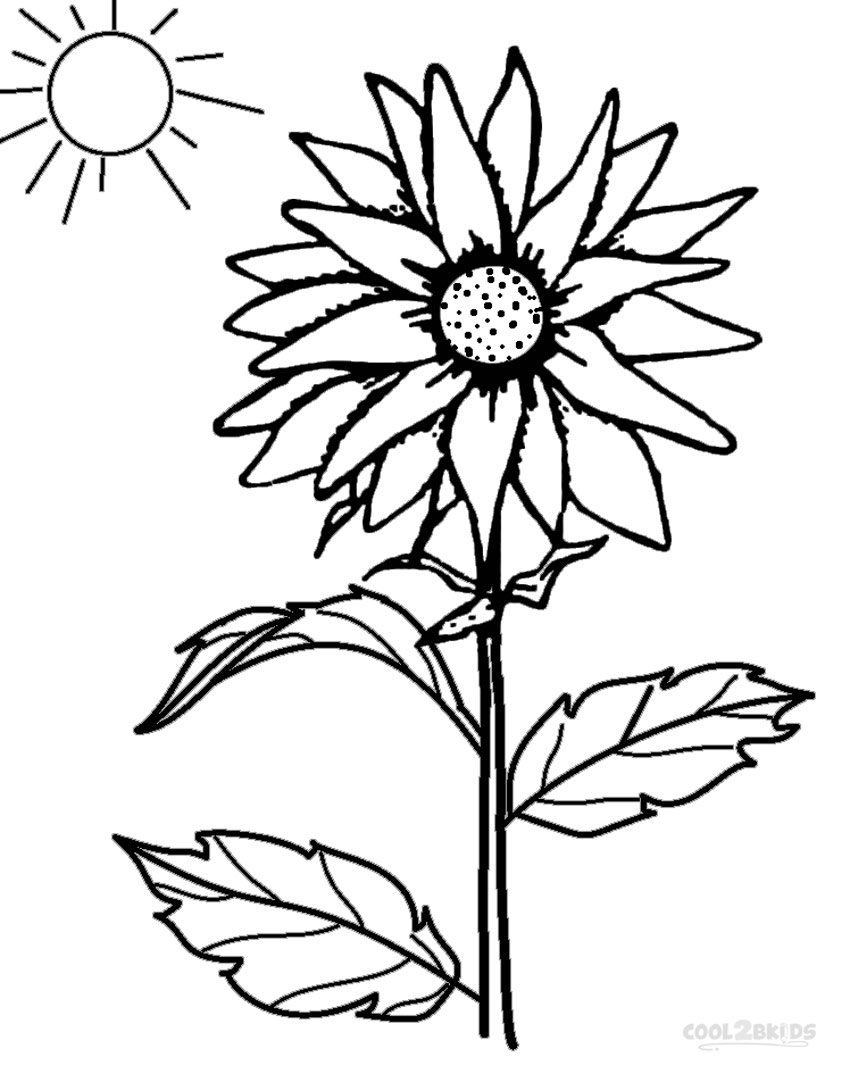 coloring pages of to draw a sunflower