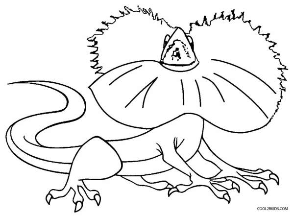 lizard coloring page # 23