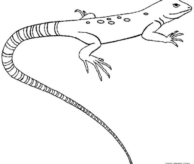 Printable Lizard Coloring Pages For Kids Coolbkids