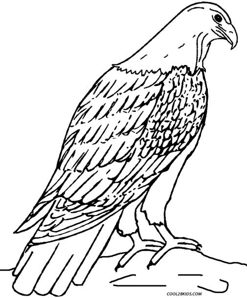 free bald eagle in nest coloring pages