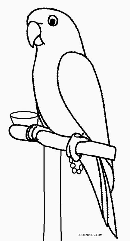 parrot coloring page parrot free printable coloring pages animals