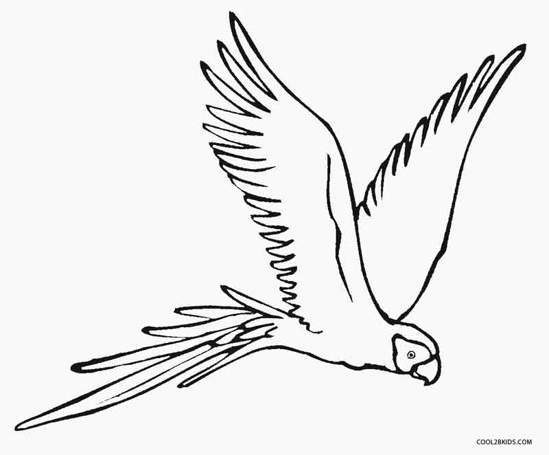 parrot coloring page lucy learns free parrot coloring sheets to print