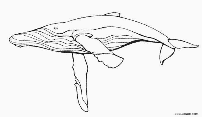 humpback whale coloring pages humpback whale coloring page