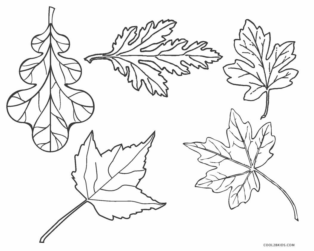 Leaf Outline Coloring Page