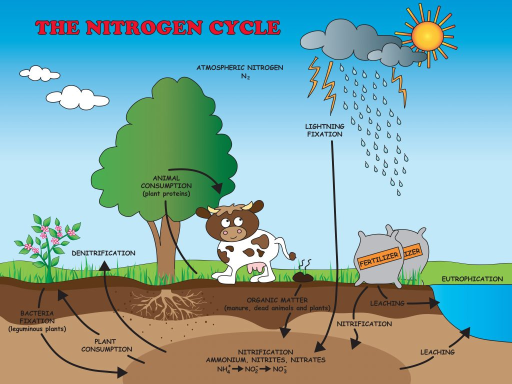 Nitrogen Cycle Facts For Kids Coolaboo