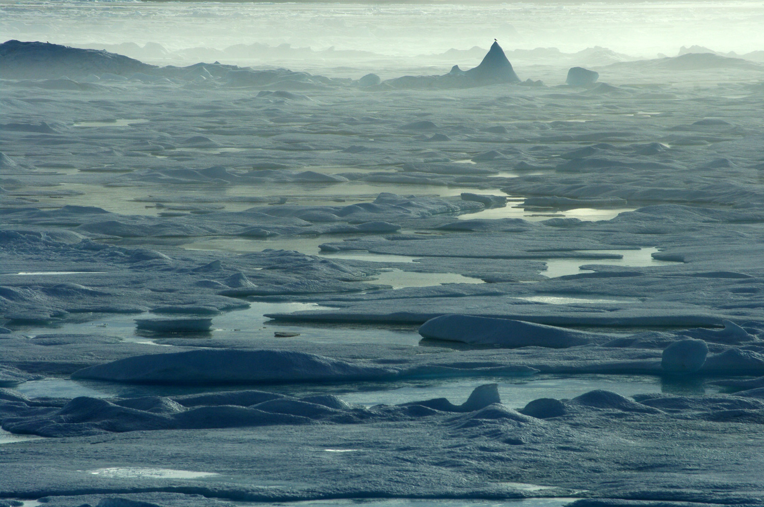 Antarctica And The Arctic Compared Differences And