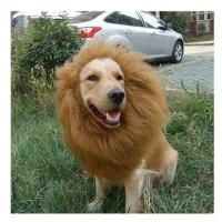 Hundekostüm Löwenmähne für Hunde