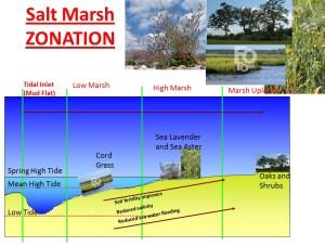 Coastal_habitats