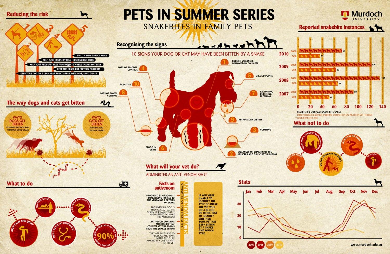 Infographic Slangenbeten bij huisdieren
