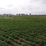 Low Pressure Pivot Irrigation