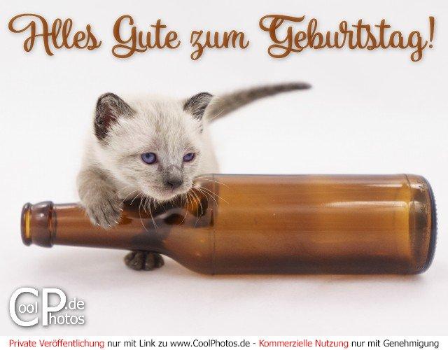 Geburtstagslied Lustig Happy Cat Katzenvideo Als