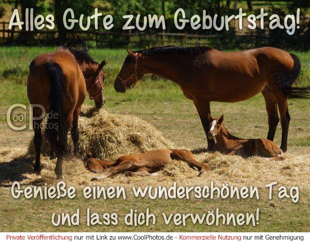 Kostenlose Pferde Bilder Gifs Grafiken Cliparts Anigifs