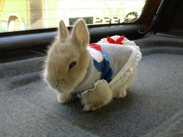 我最愛的麻吉兔兔也將面臨生老病死的問題 @麻吉小兔吃貨旅行團