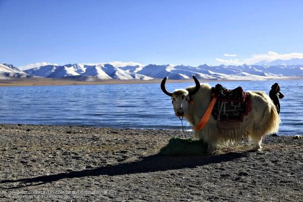 【西藏2015紀錄】眼睛看到天堂,身體卻在煉獄。