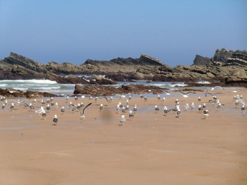 beach-1535380_1920