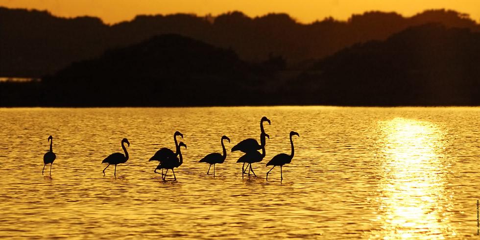 10 planes originales para disfrutar de Formentera en invierno