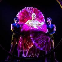 La Jaula de las Locas regresará al Teatre Tívoli de Barcelona en octubre