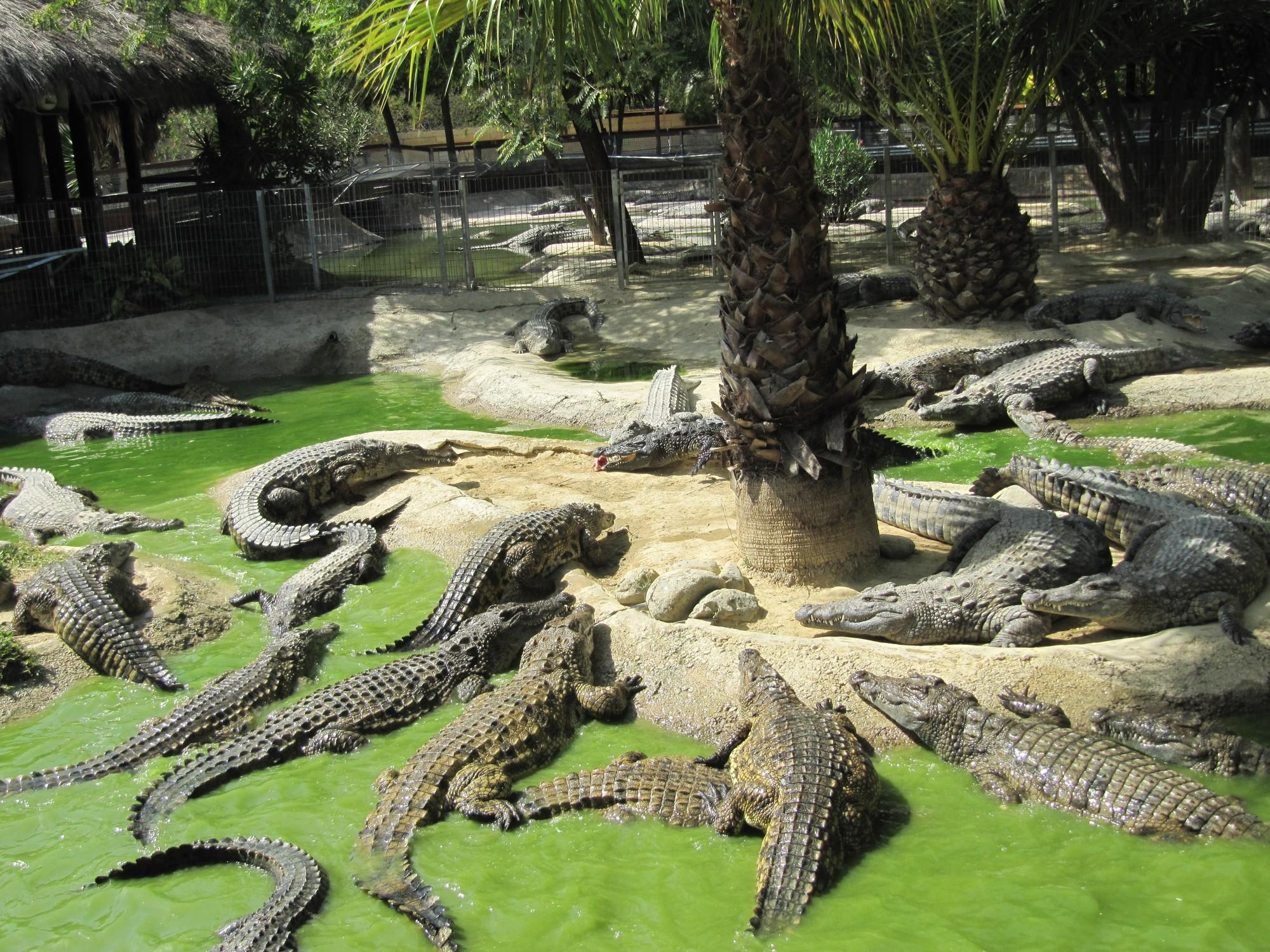 Afbeeldingsresultaat voor crocodile park torremolinos