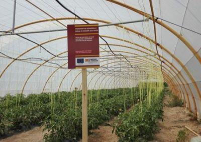 """Ensayos situados en Barbastro sobre el """"Efecto del nivel hídrico del suelo tomate rosa de Barbastro"""""""