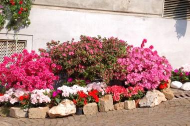 Primavera in fiore - Cantù