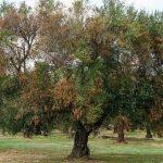Diagnosi e trattamento fitopatologie alberi e piante