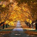 Parchi, viali alberati e forestazione urbana