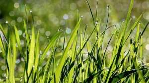 Come curare il prato del giardino